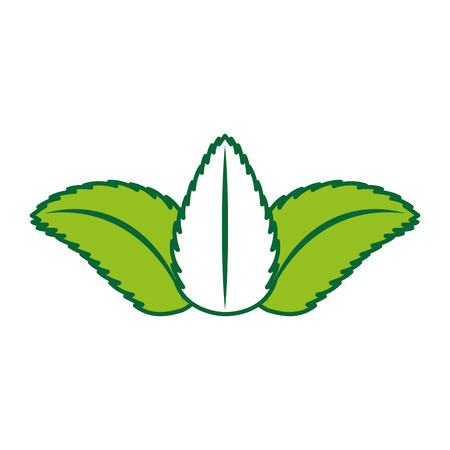 tea leafs product icon vector illustration design Stock Vector - 81847363