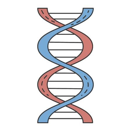 A dna molecule isolated icon vector illustration design. Illustration