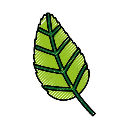 A tea leafs product icon vector illustration design. Illustration