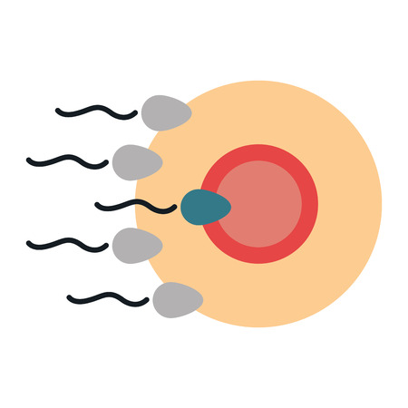 Fertilization of the ovum by the spermatozoon vector illustration design