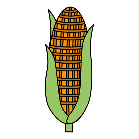 corn vegetable isolated icon vector illustration design