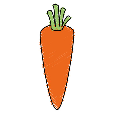 carrot fresh isolated icon vector illustration design