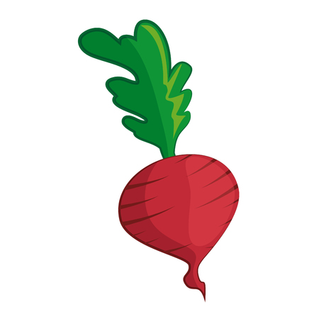 radish vegetable icon over white background colorful design vector illustration