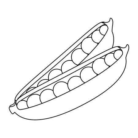 エンドウ豆アイコン白背景ベクトル イラスト上の鞘  イラスト・ベクター素材