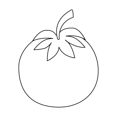 tomato vegetable  icon over white background vector illustration Ilustração