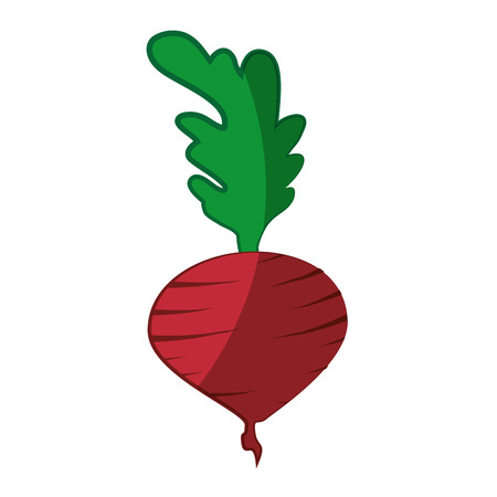 radish vegetable icon over white background vector illustration