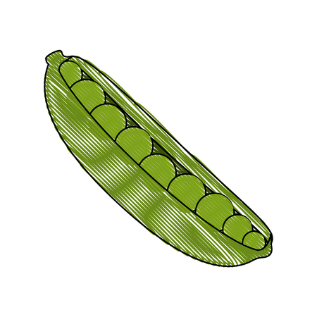Sheath of peas icon over white background vector illustration Reklamní fotografie - 82079804