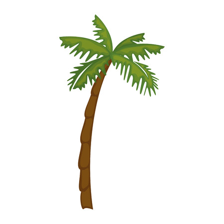 isolated beach palm icon vector illustration graphic design