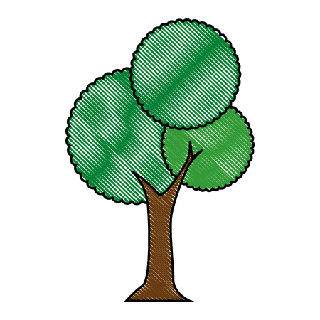 tree icon over white background colorful design vector illustration