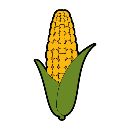 isolated corn vegetable icon vector illustration graphic design Illustration