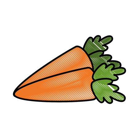 isolated two carrot vegetable icon vector illustration graphic design