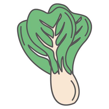 fresh lettuce isolated icon vector illustration design