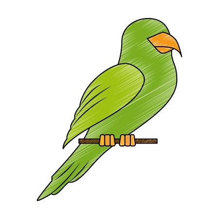 Papegaai vogel pictogram op witte achtergrond kleurrijke ontwerp vector illustratie Stockfoto - 83281957