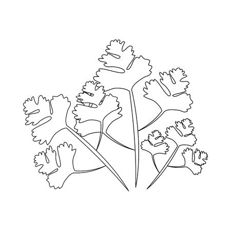 Coriander icon over white background vector illustration Ilustracja