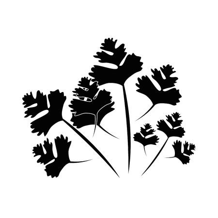 Icono de cilantro sobre fondo blanco ilustración vectorial Foto de archivo - 83818996