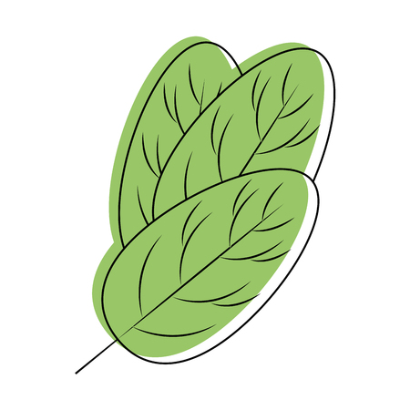 Spinach leaf icon vector illustration