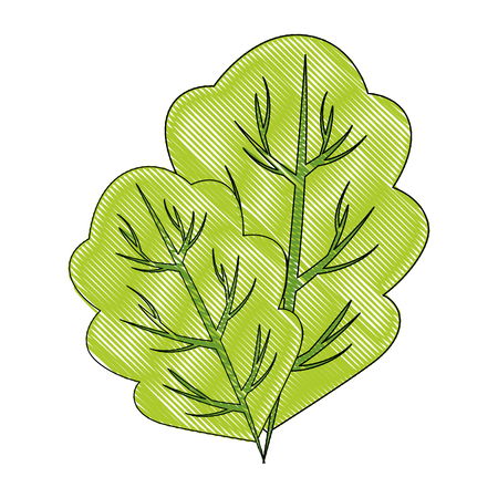 spinach leaf icon over white background vector illustration