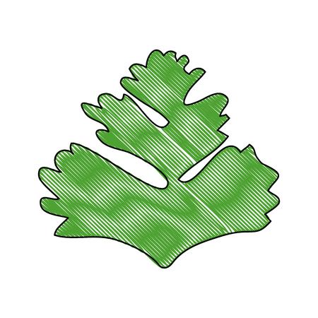 Koriander-Symbol auf weißem Hintergrund Vektor-Illustration Standard-Bild - 83819254