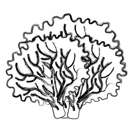 lettuce fresh isolated icon vector illustration design