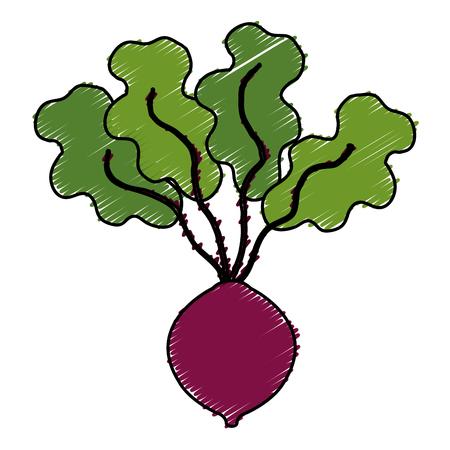 Onion fresh isolated icon vector illustration design Illustration