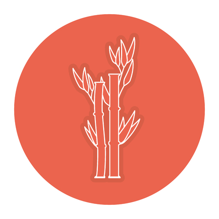 lucky bamboo: bamboo plant nature icon vector illustration design