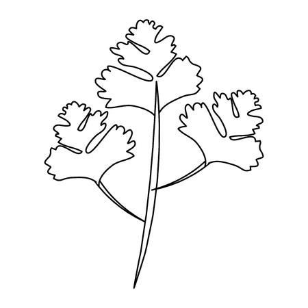 コリアンダーの葉白い背景ベクトル画像上のアイコン