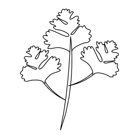 coriander leaves icon over white background vector illustration