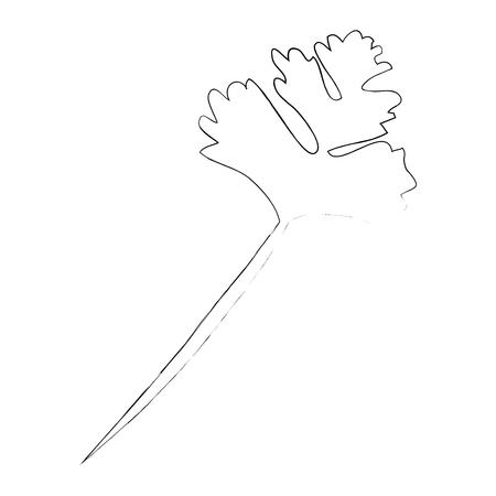 Icono de hojas de cilantro sobre fondo blanco ilustración vectorial Foto de archivo - 84666037