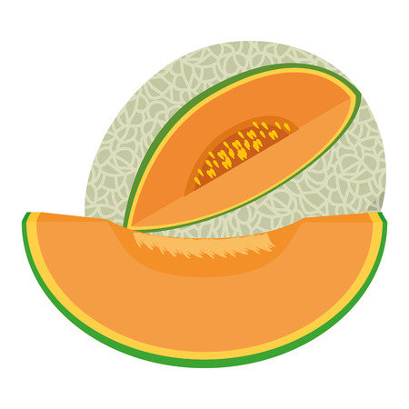 Melon delicious fruit icon vector illustration graphic design, isolated on white Illustration