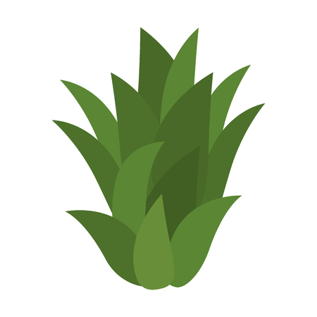 Sweet and delicious pineapple leaves, icon vector illustration graphic design