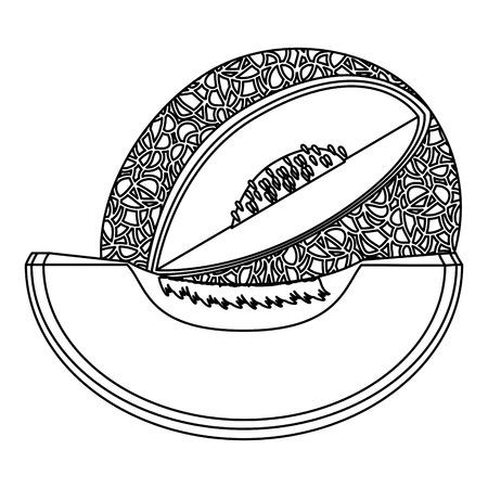 Melon delicious fruit icon vector illustration graphic design