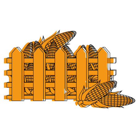 fence with fresh corn cobs vector illustration design