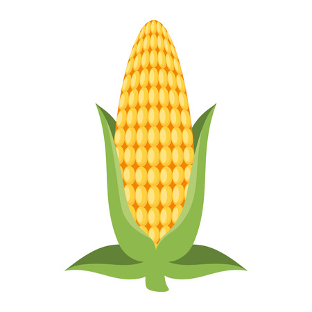 Fresh corn cob icon illustration design