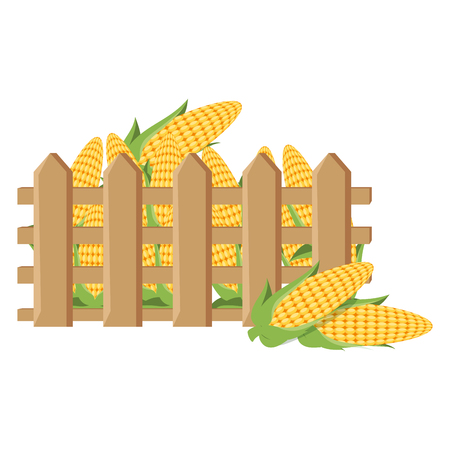 Wooden fence with fresh corn cobs illustration design