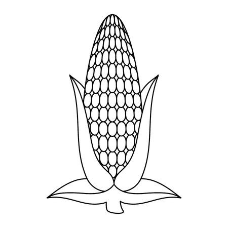 Uncolored corn illustration.