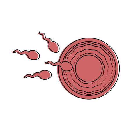 Fertilization of the ovum vector illustration design