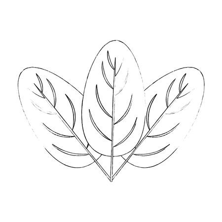 ほうれん草の葉白い背景ベクトル画像上のアイコン