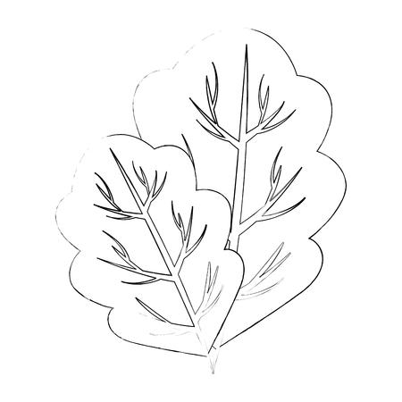 lettuce leaf icon over white background vector illustration Иллюстрация