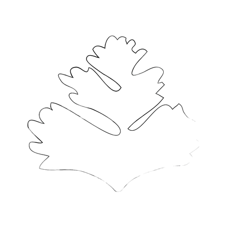 Coriander icon over white background vector illustration Illustration