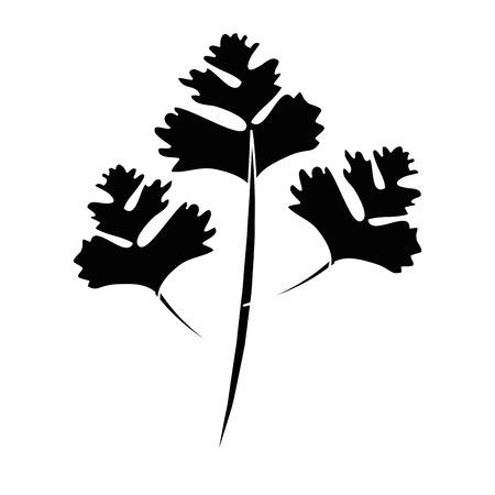 パセリの葉シルエット アイコン ベクトル イラスト グラフィック デザイン