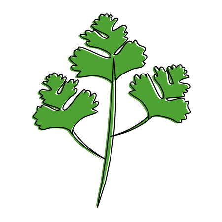Petersilie Blätter Silhouette Symbol Vektor-Illustration Grafik-Design Standard-Bild - 85075953