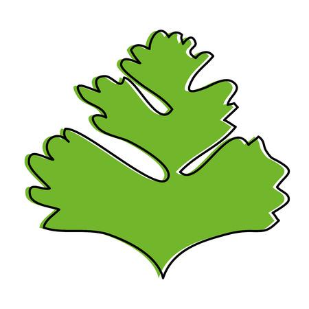 Petersilie Blätter Silhouette Symbol Vektor-Illustration Grafik-Design Standard-Bild - 85075954