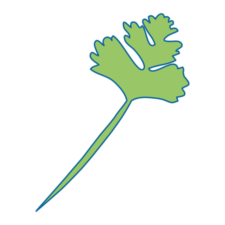 parsley leaves vector icon vector illustration graphic design