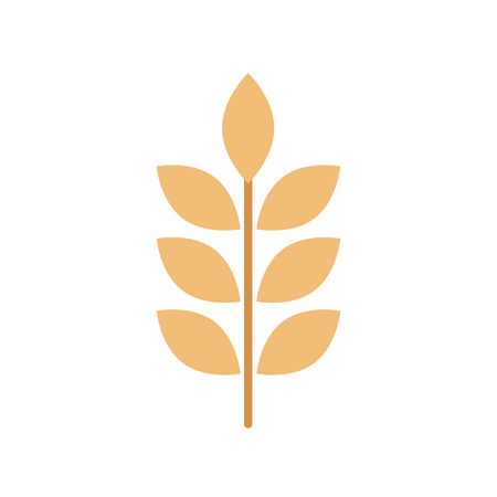 wheat or barley ears branch grains harvest on white background vector illustration 向量圖像