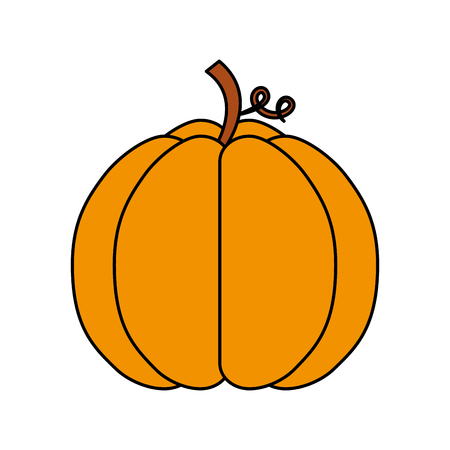 autumn seasonal pupmkin harvest nature vector illustration