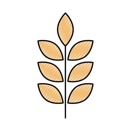밀 또는 보리 귀 분기 곡물 수확 흰색 배경에