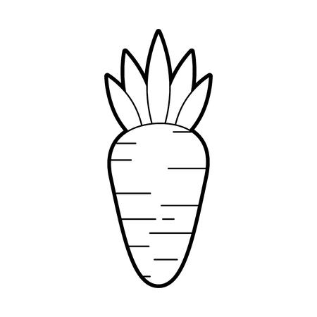 Wortel Groente Vers Gezond Voedsel Vector Illustratie