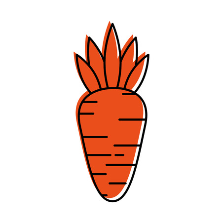 carrot vegetable fresh healthy food vector illustration