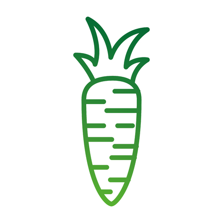carrot vegetable fresh supermarket food design vector illustration Illustration