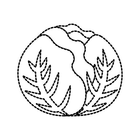 cabbage vegetable organic fresh harvest vector illustration